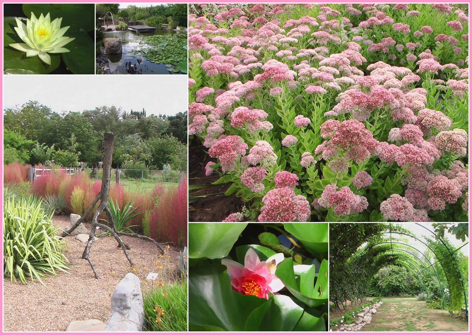 Pigeonnieresplendy2 a limoux for Jardin aux plantes