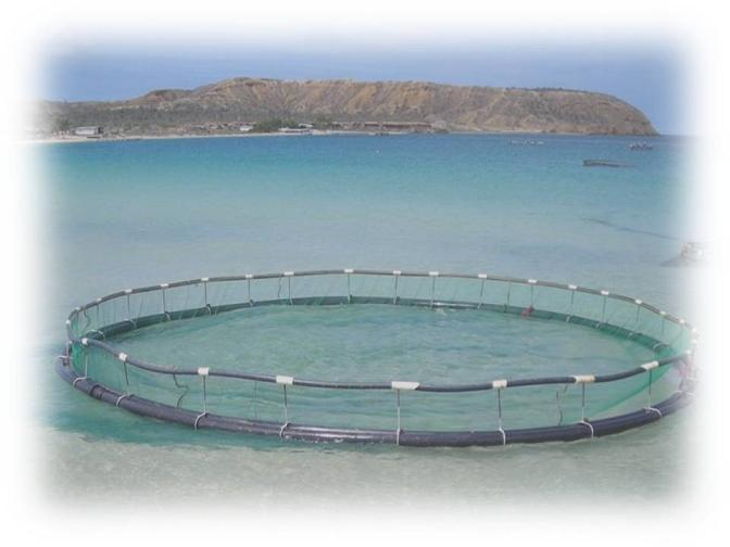 Acuicultura isla de cubagua for Jaulas flotantes para piscicultura
