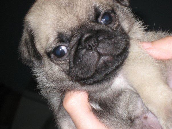 milivamipe: perritos tiernos!!!=)