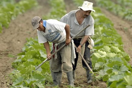 http://4.bp.blogspot.com/_kUlKPNq1Nbc/TIy5ORYg7gI/AAAAAAAAAY4/XRhfPr00sHY/s1600/agricoles.jpg