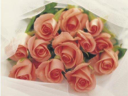 São rosas senhor...São rosas...