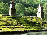 Moss covered roof in Lathkill Dale