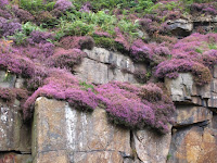 Heather covered rocks