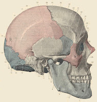 ENT Anatomy: Temporal & Infratemporal Fossas Infratemporal Space