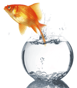 Goldfish Care Cleaning Your Goldfish Bowl
