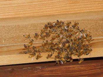 Malarkey Bees