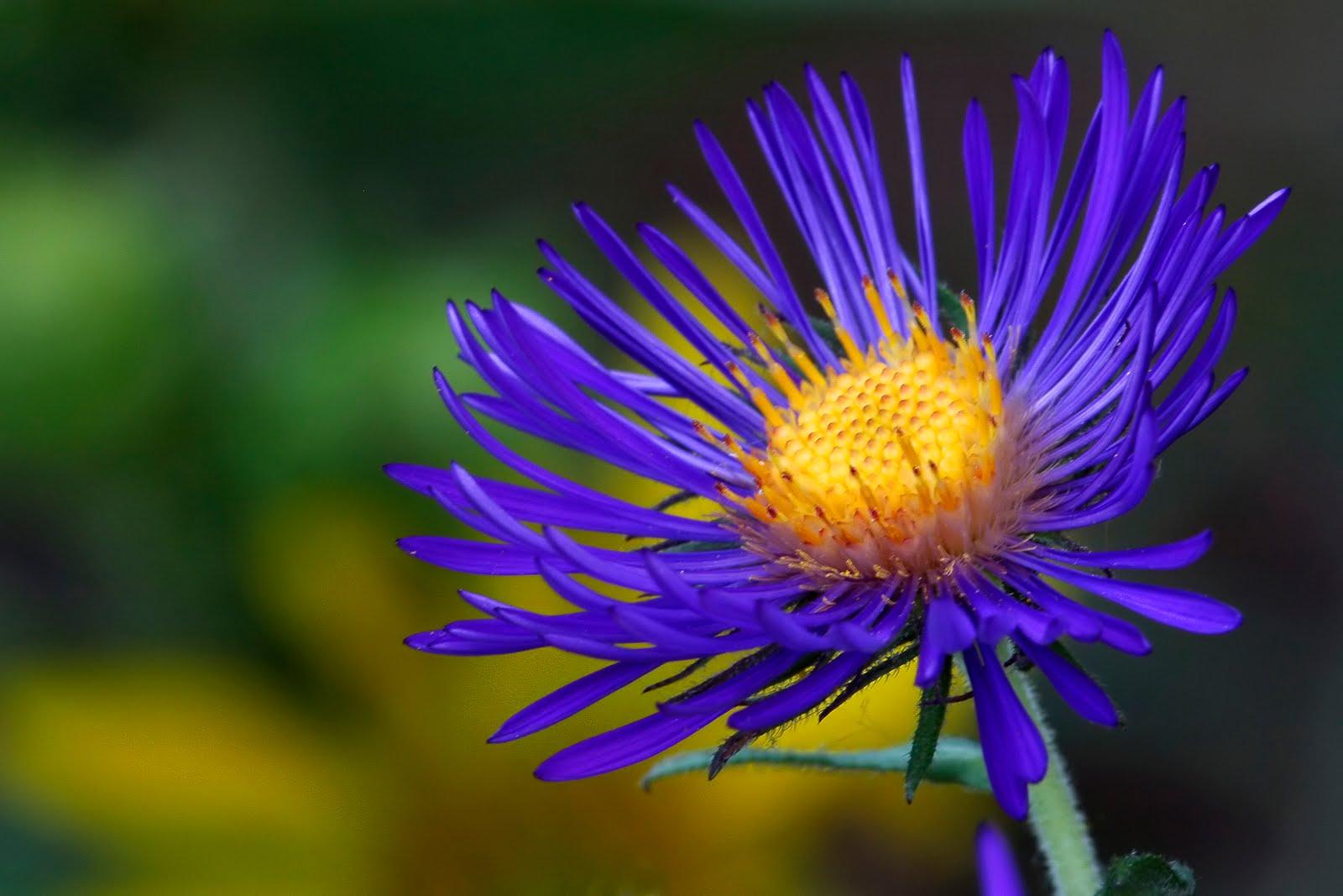 Scott Evers Photography: Illinois Wildflowers