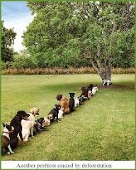 La déforestation: même les chiens en subissent les conséquences!