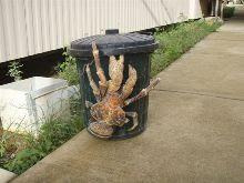 Belle décoration pour une poubelle, n'est-ce pas? Ne te méprends pas, celui-ci est bien vivant!