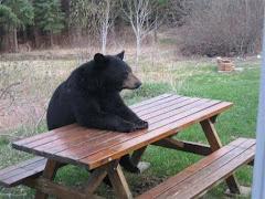Cela fait un heure que j'attends mon repas!