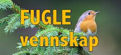 Se min Fugleblogg