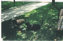 Nela y Lua jugando