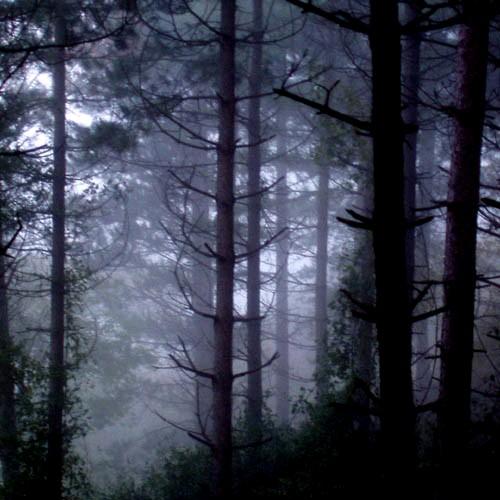 bosque%2Boscuro