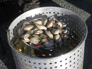 Bucket of Quahogs