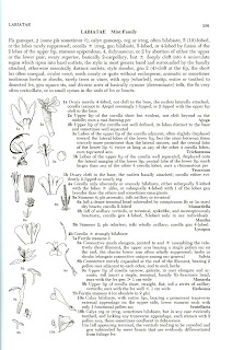 Example Page from Hitchcock and Cronquist - Flora of the Pacific Northwest
