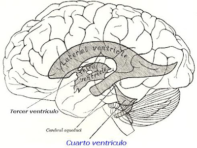 DRUG FOR HEALTH: Cuarto ventrículo