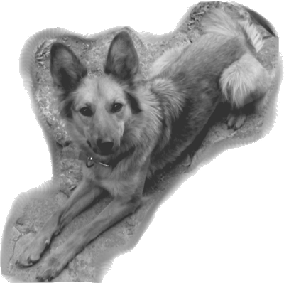 Mi perra Yeñé vectorizada según el quinto seteo