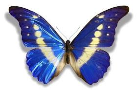 As borboletas são belas