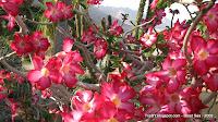 цветы, мертвое море, TripBY.blogspot.com, Израиль