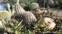 кактусы, TripBY, оазис Мертвого моря, Израиль