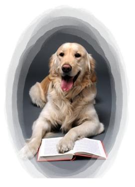 El cachorro: ¿Que debemos enseñarle y como debemos trabajar con él?