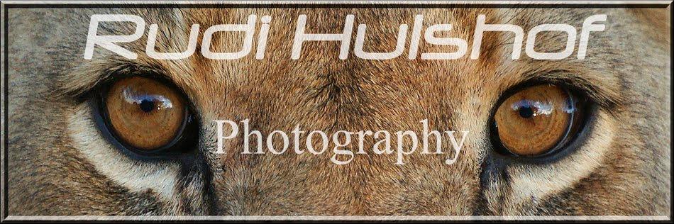 Rudi Hulshof Photography