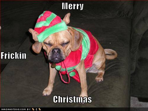Funny Christmas Animal