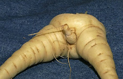 naughty vegetable