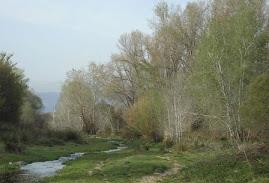 El Riu Tenes