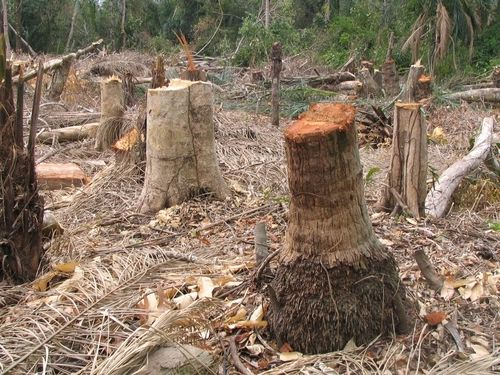 essay on deforestation in india Hindi essay on deforestation essay on hindi at present day hindi is national language in india and urdu is national language of pakistan and i.