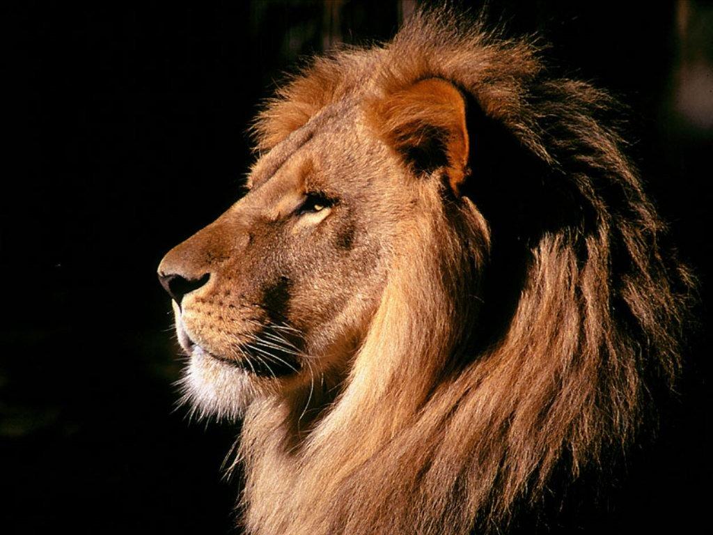 El León.