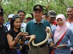 Lidi Baby Burmese Phython