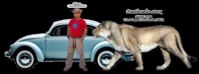 León gigante,actualmente extinto. P+l+atrox