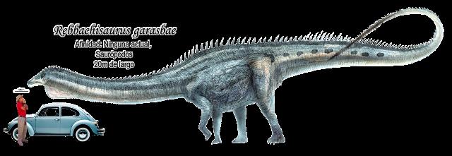 Rebbachisaurus garasbae a escala.