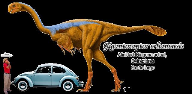Gigantoraptor erlianensis a escala.