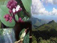 ANTES DEL 7 DE JULIO ¡VOTA POR EL YUNQUE EN CAMPAÑA NUEVAS 7 MARAVILLAS NATURALES!