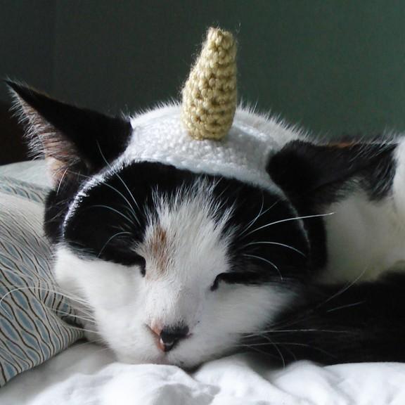 Frog Wearing Cat Hat
