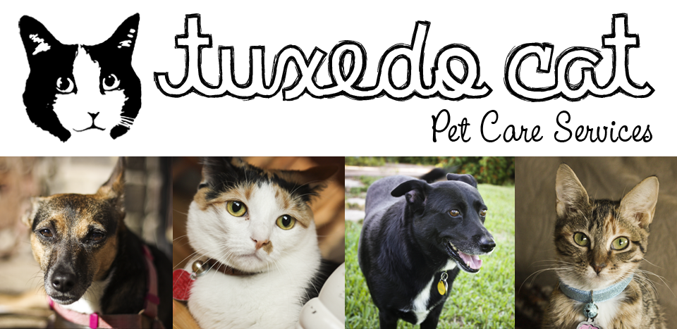 Tuxedo Cat Pet Care