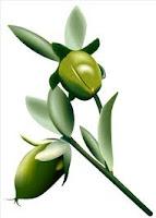 L'huile de jojoba pour la croissance des cheveux