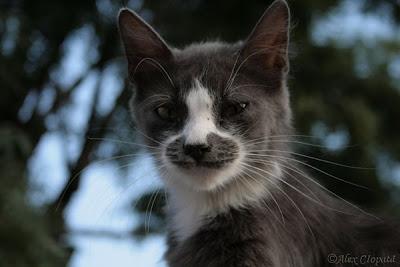 Aristro Cat