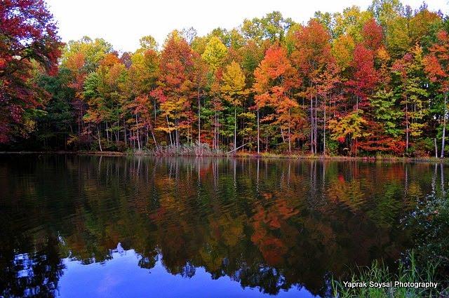 Yaprak Soysal Photography Fall Foliage Lums Pond
