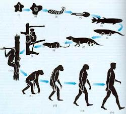 evolucion desde lo mas pequeño