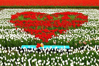 [Tulip+Fields+(15).jpg]