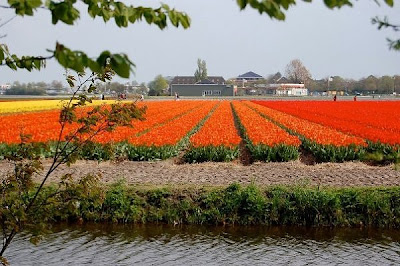 [Tulip+Fields+(14).jpg]