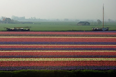 [Tulip+Fields+(7).jpg]