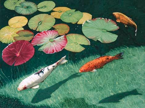 Amaze pics vids koi fish or japanese carp for Koi fish images