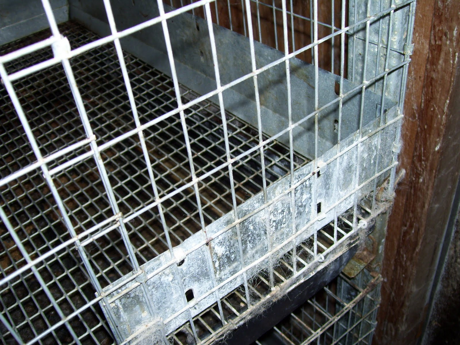 Rabbit Cages: A picture of a home built rabbit cage