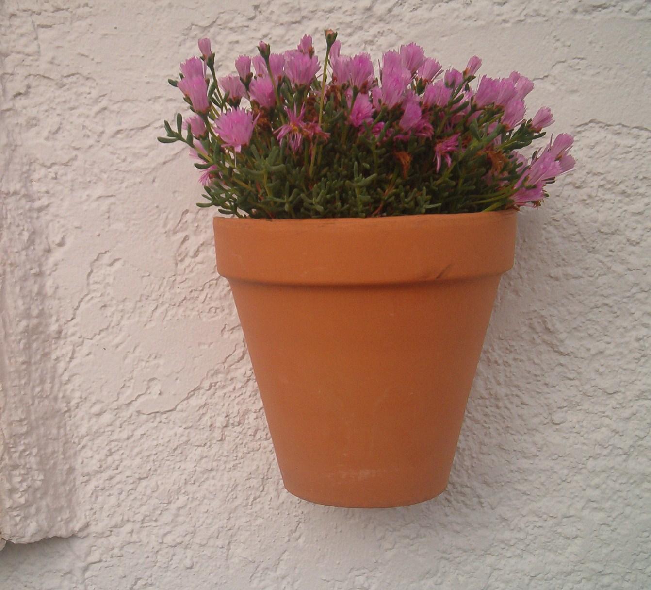 La mimosa de mi jardin las macetas de pared - Macetas de pared ...