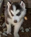 scam spam daniella kamche puppy cameroon daniella05five@yahoo.com