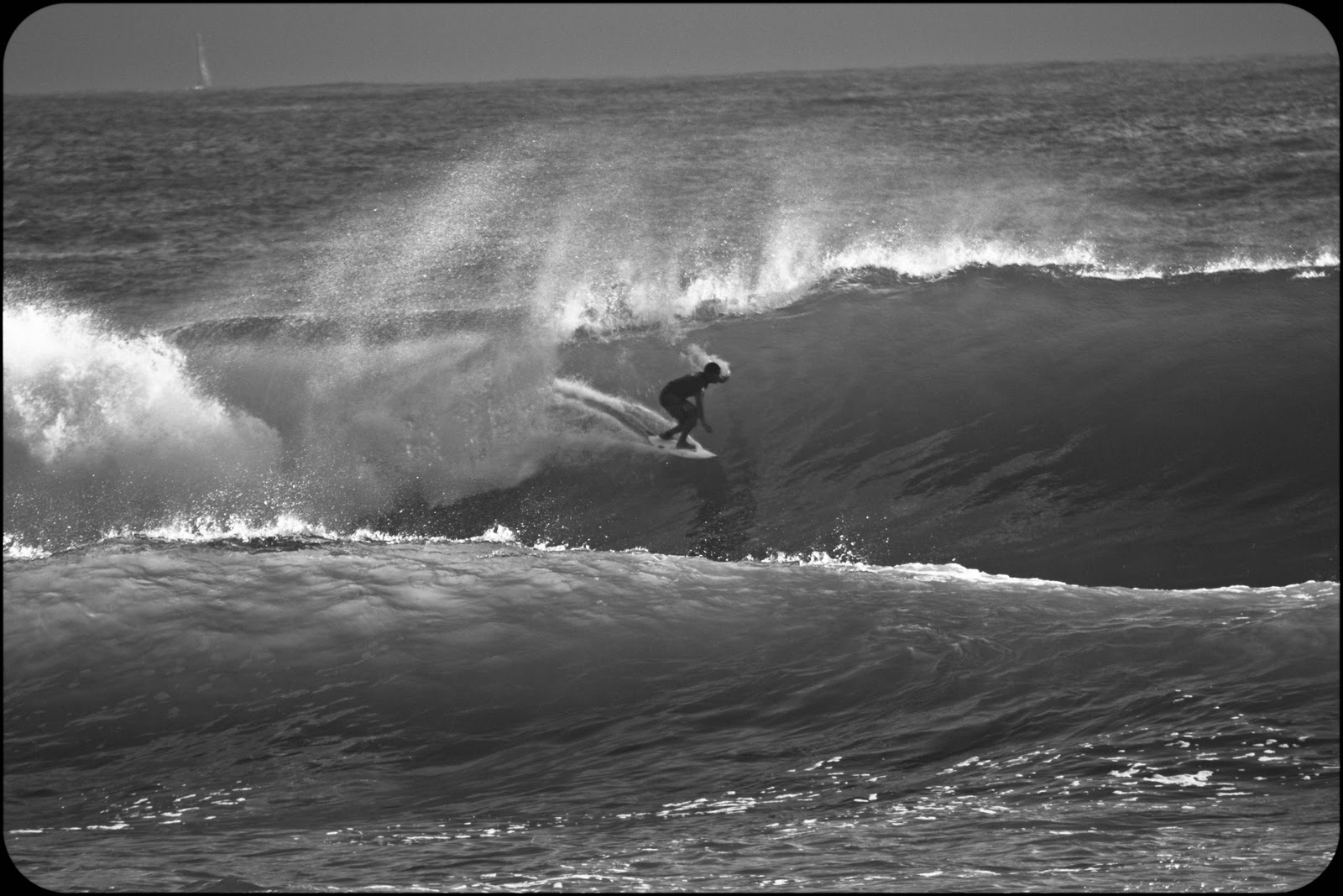 spicoli tasty waves quote